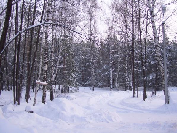 Das angrenzende Waldgebiet