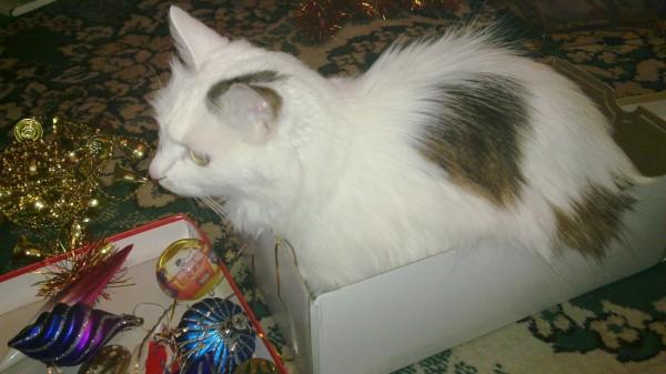Schon ein bisschen hinderlich beim Weihnachtsbaumschmücken, wenn die Katze auf einmal Besitzrechte am Schmuck anmeldet